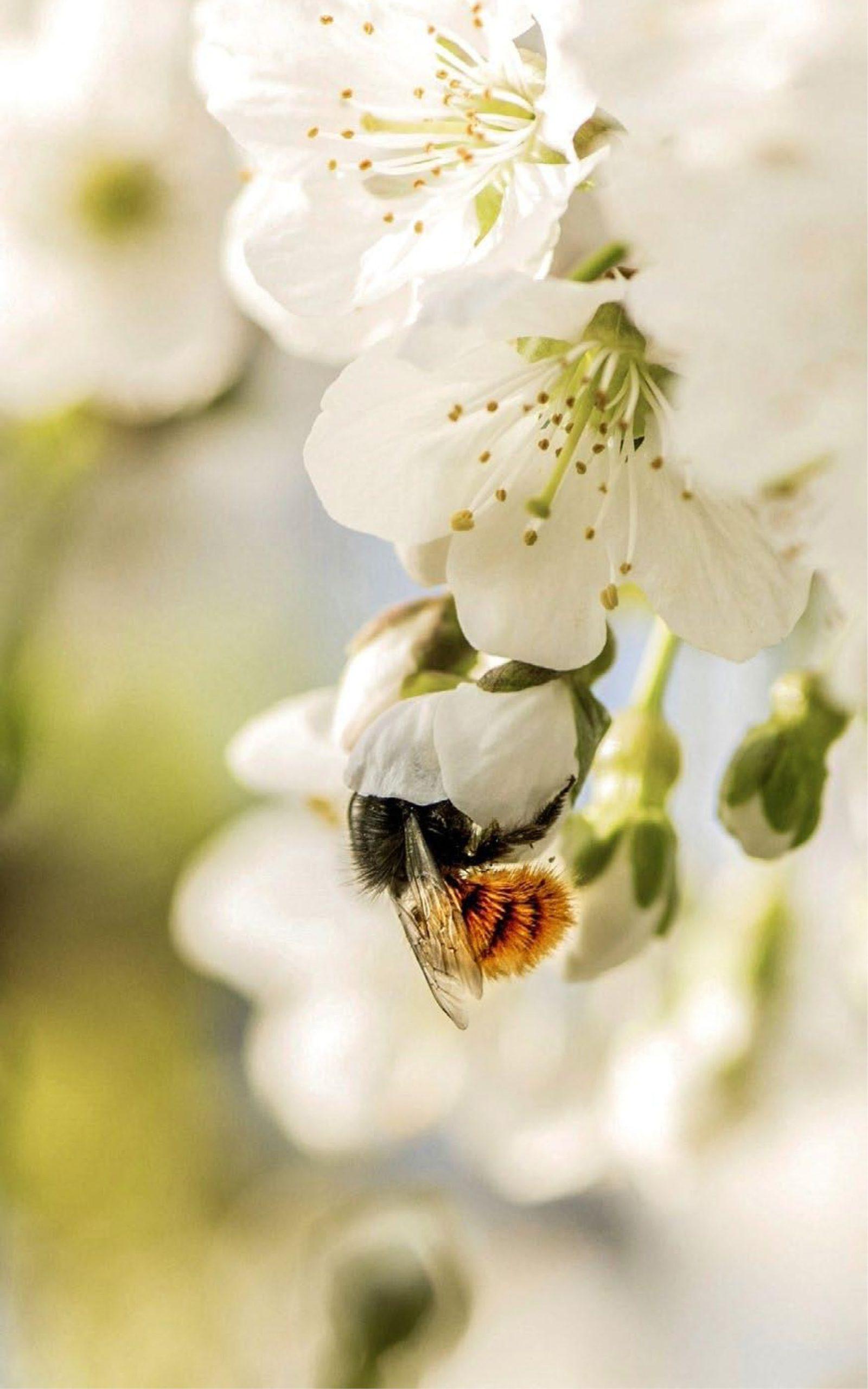 Pollinature x Saint-Honoré Paris_beehome